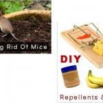 MIY Mice Repellents & Baits