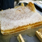 Harvesting Honey From a Natural Comb