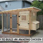DIY An Amazing Chicken Coop