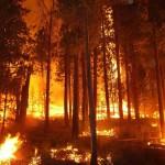 SHTF via Wildfire