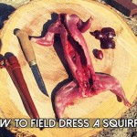 Field Dress a Squirrel