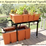 Aquaponics: Co-Mingling Fish & Garden