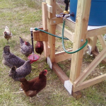 DIY Automatic Chicken Watering  System