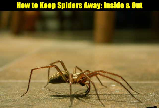 How to keep spiders away the prepared page for How to keep spiders out of the house