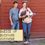 The Basics of Backyard Chickens