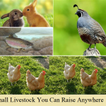 Small Livestock For Small Spaces