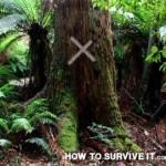 Creative Survival