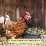Make Coop-Cleaning Easier