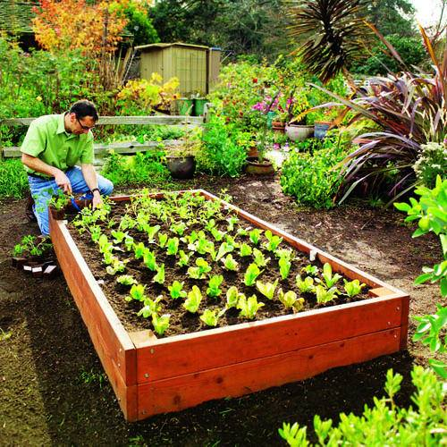 Build Your Own Raised Garden Beds