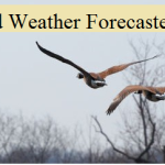 Wild Weather Forecasters