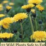 52 Wild Plants Safe to Eat