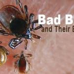 Identify Bugs & Their Bites