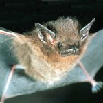 DIY Bat House & Benefits
