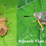 Organic Pest Control – Companion Planting