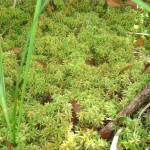 Surprising Survival Uses for Moss