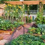 Increase Garden Productivity