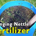 DIY Stinging Nettle Fertilizer