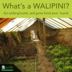 Walipini For Year Round Gardening