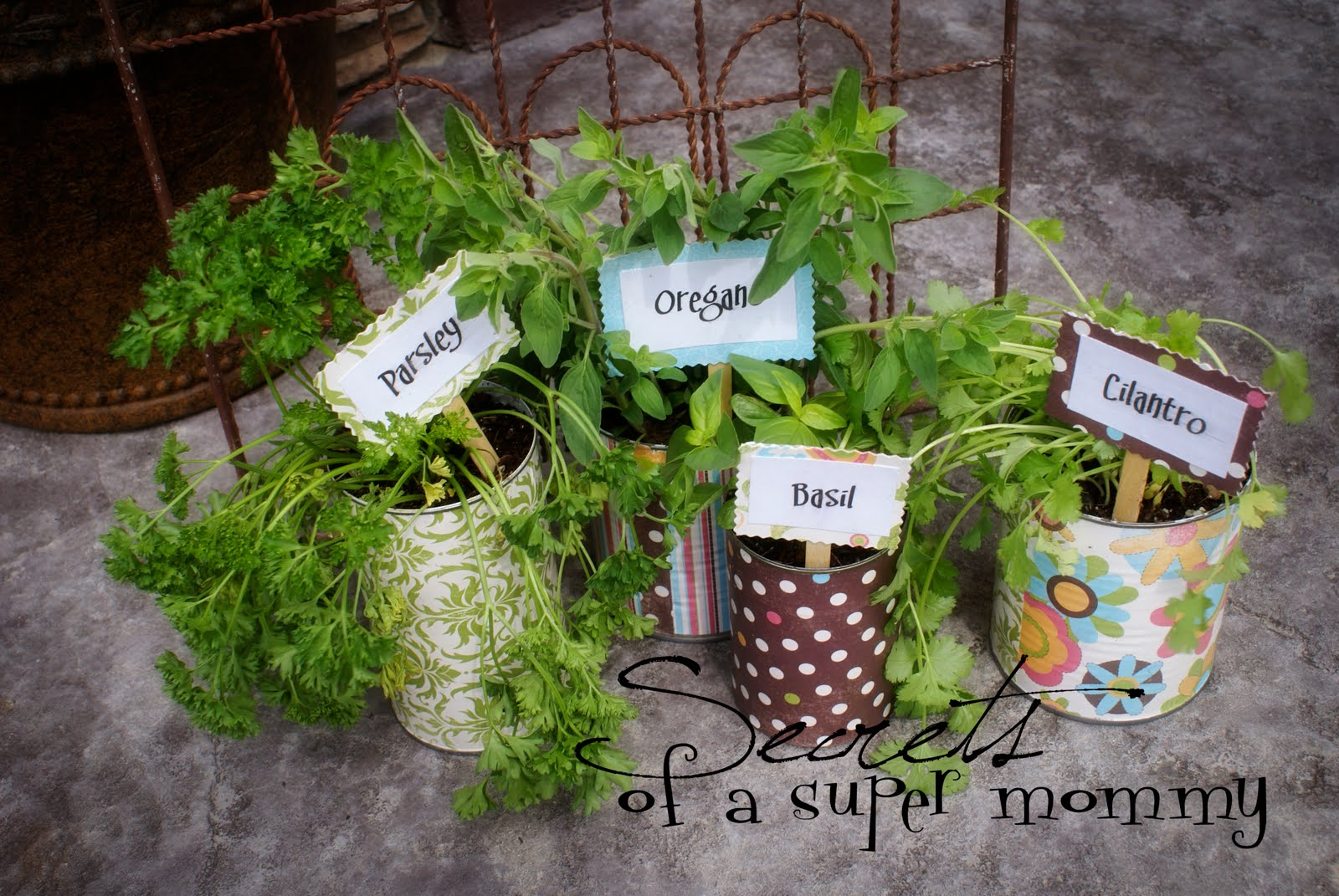 Growing herbs at home the prepared page - Aromatic herbs pots multiple benefits ...