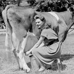 Hand Milking a Cow or Goat