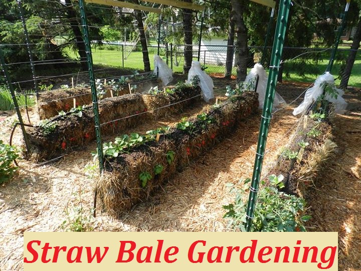 Straw bale gardening the prepared page for Straw bale gardening joel karsten