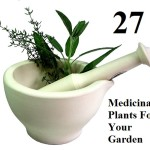 27 Medicinal Plants For Your Garden