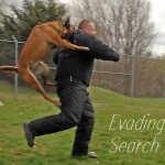 Evading Search Dogs