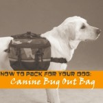 Canine Bug Out Bag