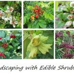 Landscaping with Edible Shrubbery