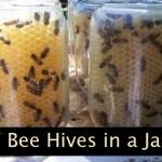 DIY Bee Hives in a Jar