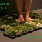 MIY Moss Bath Mat –  Moss Myths Dispelled