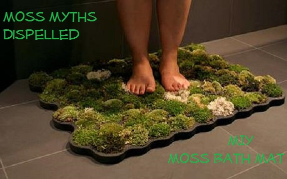 Miy Moss Bath Mat Moss Myths Dispelled The Prepared