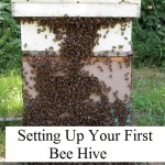 Setting Up Your 1st Bee Hive