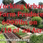 A Working Urban Farm