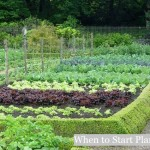 When to Start Planting
