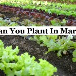 Can You Plant In March?