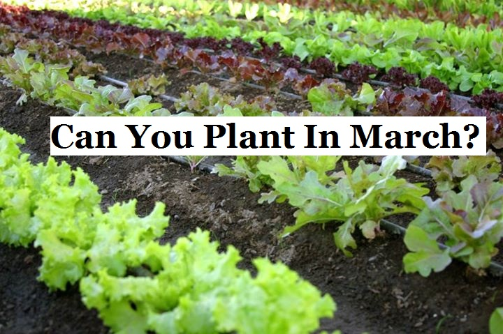 Can You Plant In March The Prepared Page