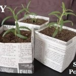 MIY Seed Pots
