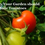 Why Your Garden Should Include Tomatoes