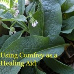 Using Comfrey as a Healing Aid