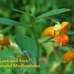 3 Wild Natural Medications
