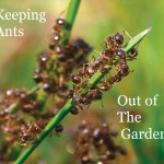 Keeping Ants Out of the Garden