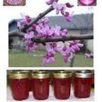 Red Bud Jelly