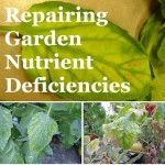 Repairing Garden Nutrient Deficiencies