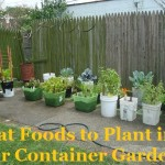 What Foods to Plant in Your Container Garden