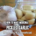 Why & How to MIY Medicinal Pickled Garlic