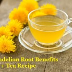 Dandelion Root Benefits + Tea Recipe