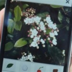 A Phone App Identifies Plants From Your Picture!