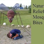 Natural Relief for Mosquito Bites