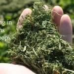 Using Grass Clippings in Gardens and Coops